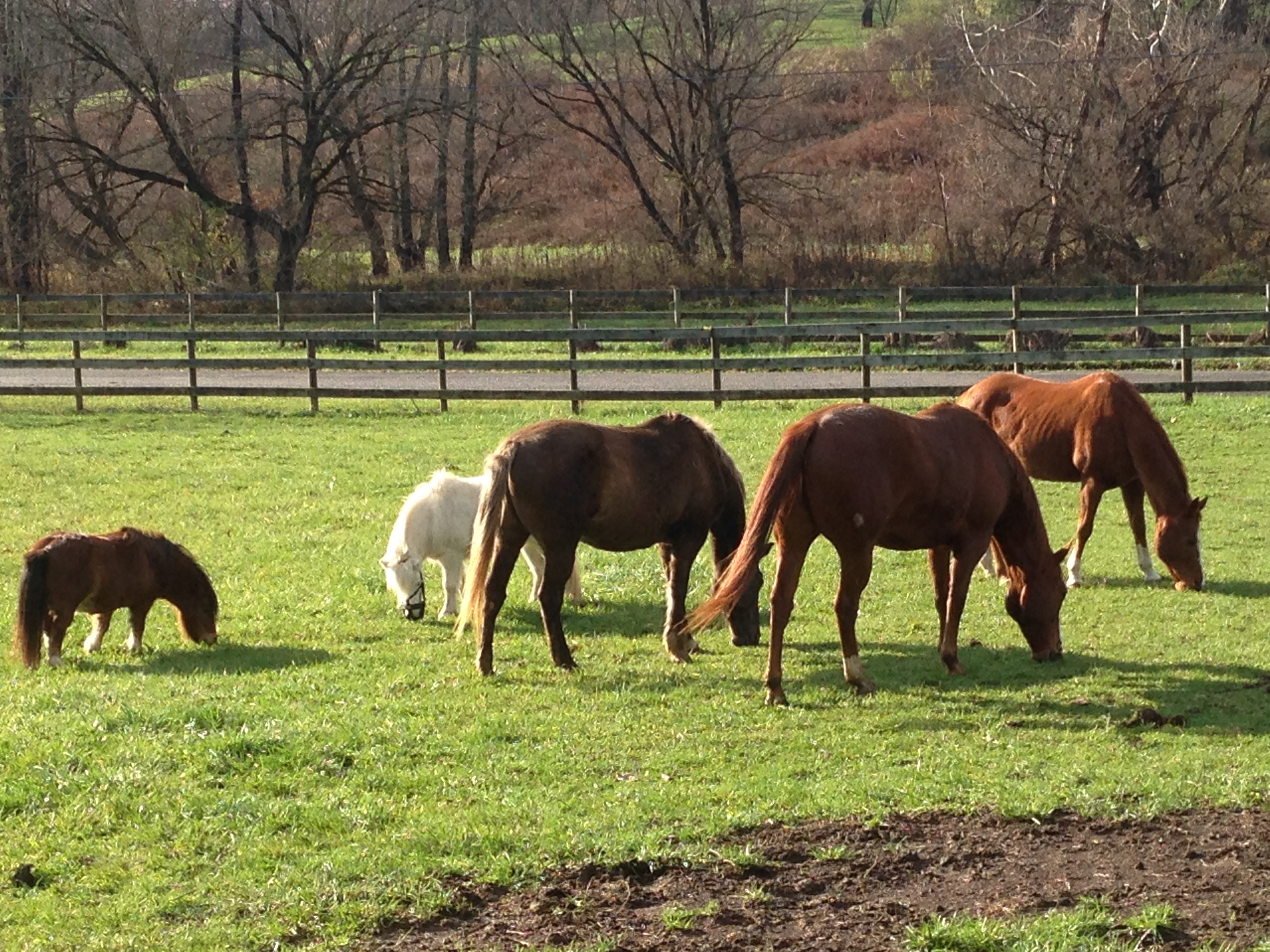 Looking Glass Farms A Family Horse Farm